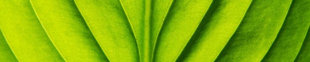 Leaf-detail-e1447671688342-opti